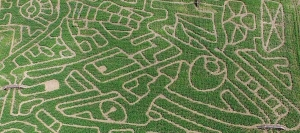 A-Maize-Maze-ing Day Out